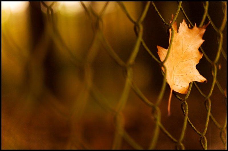 Poesía en Español: Quieres ser libre